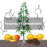 Terpenes and Cannabinoids