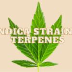 Indica Strains